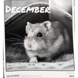 December Hamster