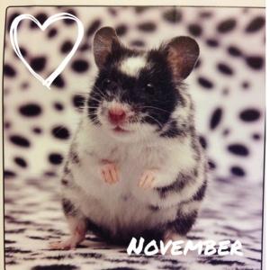 November Hamster