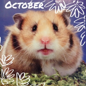 October Hamster