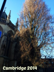 Cambridge January 2014